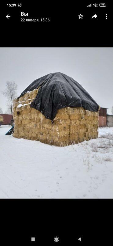 стационар для животных в Кыргызстан: Ячменная солома Осталось 800 шт