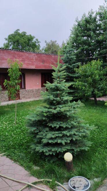 пансионат каприз в Кыргызстан: Продам Дом 85 кв. м, 7 комнат