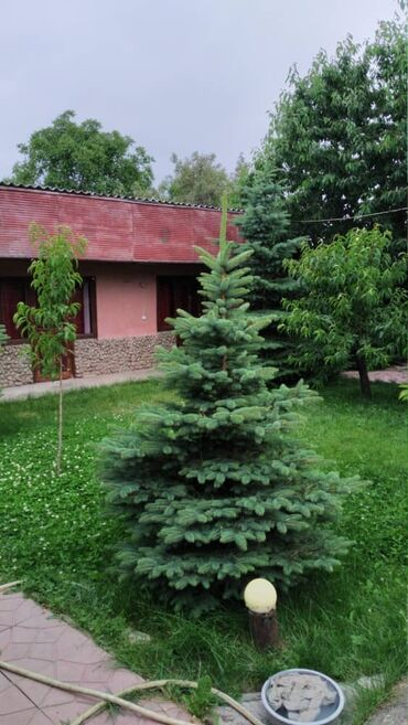 Ат касилка - Кыргызстан: Продам Дом 85 кв. м, 7 комнат