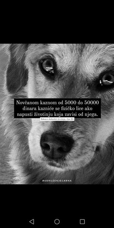Kućni ljubimci - Srbija: Domaće životinje