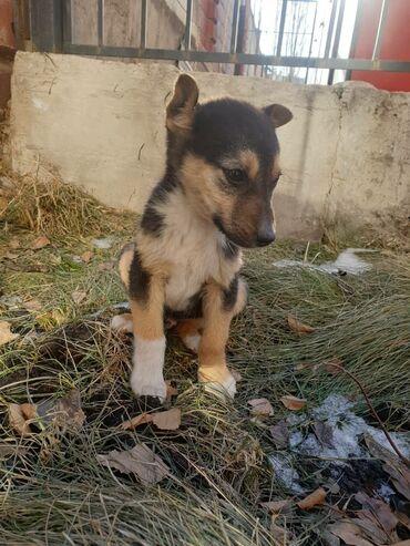 акустические системы со встроенным фонариком колонка в виде собак в Кыргызстан: Джеки с ушами в растопырку очень верит в чудо! Он хочет быть домашним