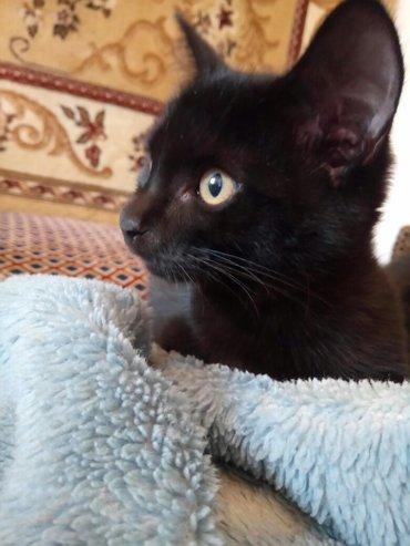 Отдам в добрые руки 2 очаровательных котят(девочек). Им 3 месяца, посл в Бишкек
