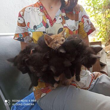2694 объявлений: Срочно, пристраиваются котята, 3 мальчика и две девочки, рыжий