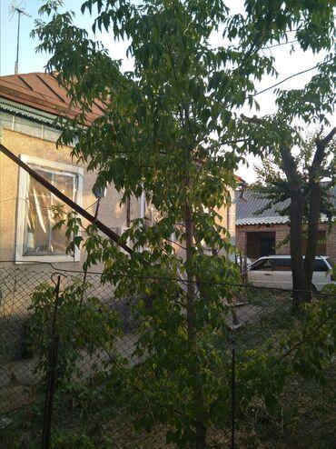 Дома в Кыргызстан: Продам Дома от собственника: 13 кв. м, 4 комнаты
