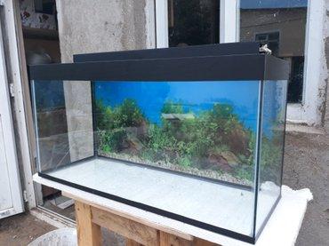 - Azərbaycan: Teze 100 litrelik akvarium 6mml wuwenin qalinliqi uzunu 80 sm