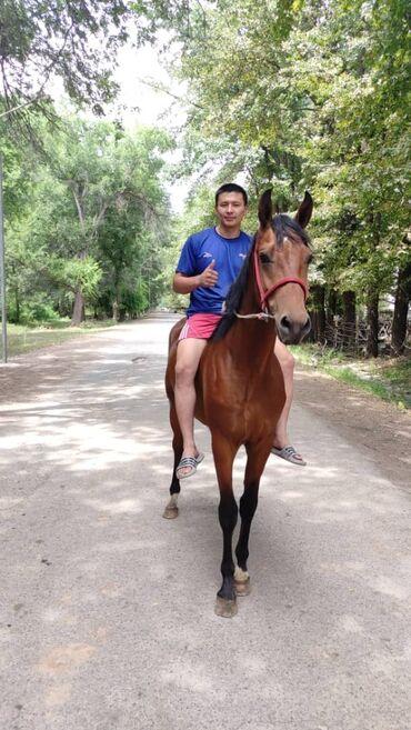 Животные - Садовое (ГЭС-3): Лошади, кони