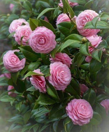 htc bir x almaq - Azərbaycan: Hər növ dekorativ ağac və güllərin satışı Sifarişlərini çatdırılması