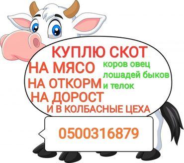 сумки для роддома купить в Кыргызстан: Куплю скот любой упитанности