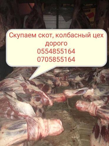 рубщик мяса в Кыргызстан: Скупаем стот на мясо и вынужденный забой в колбасный цех. Мы работаем