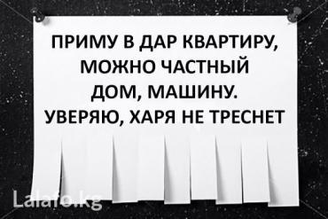 Приму в дар щенка кыргыз доботу, в Бишкек
