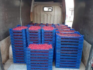 Nk-radnici - Srbija: Potrebni radnici za berbu malina u okolini Ivanjice,stan i hrana