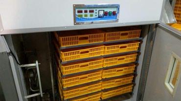 Инкубаторы Фермерские. От 350 яиц до 2012 в Бишкек
