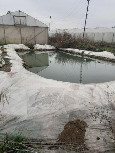 Недвижимость - Шамкир: Продам 50 соток Для сельского хозяйства от собственника