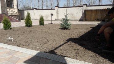 Озиления сеем газон качественно стаж 10 лет гарантия  в Бишкек