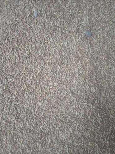 пшеницу 1 тонна в Кыргызстан: Куплю ячмень пшеницу сафлор