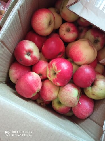 Овощи, фрукты - Кыргызстан: Рашида Иссык-Кульские, кг г.Бишкек