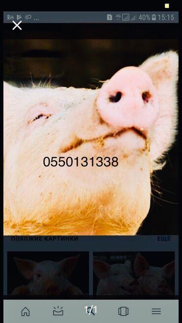 Дом и сад - Беловодское: Куплю свиней мясом тушами через веса