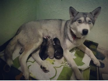 Роделись Очень красивые щенки и в Бишкек