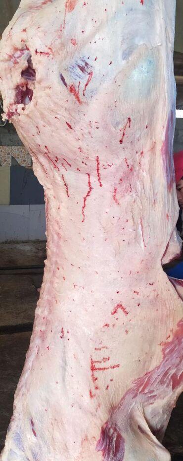 Продаю мясо быков и тёлочек оптом по оптовой цене! обрщ по тел