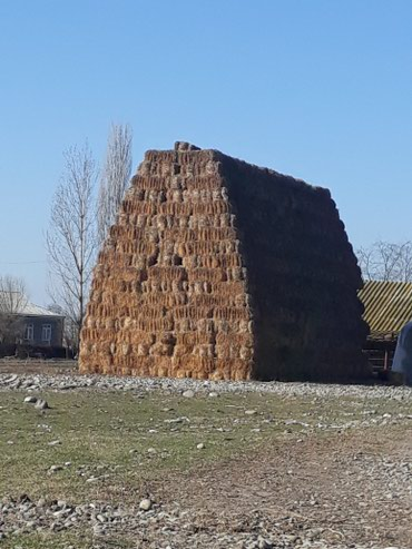Bərdə şəhərində Saman tayasi satilir 1250 denedi