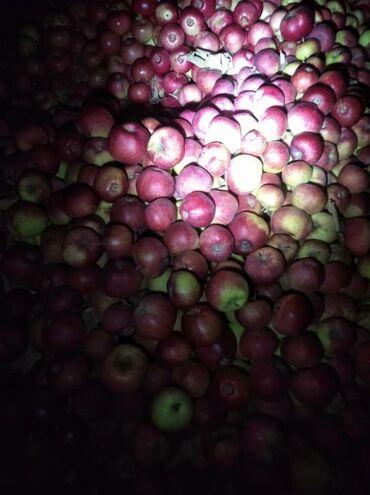 Продаю яблоки рашида,апорт,превосход общий 150кгг.Чолпон Ата Иссик