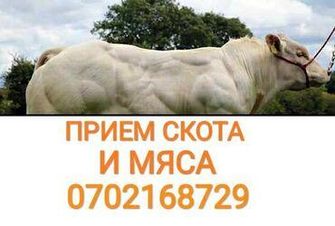 платье в клетку с белым воротником в Кыргызстан: В ЛЮБОМ ВИДЕ в колбасный цех