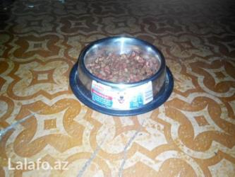 домик для маленькой собаки в Азербайджан: Миски для собак