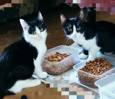 водоотводные лотки бишкек in Кыргызстан | ГРУЗОВЫЕ ПЕРЕВОЗКИ: Отдам котят в добрые руки! В связи с переездом отдам котят в добрые