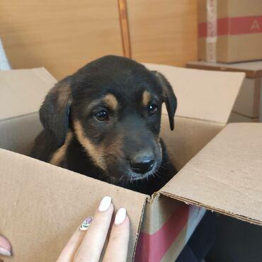 Отдаем щенка в добрые руки. Возраст примерно 2 месяца. Девочка очень л