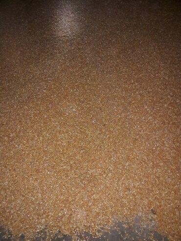акриловые краски для ванны цена в Кыргызстан: Продаю кукурузу сорт пионер. Сухая чистая. Самовывоз. Токмок . 200тон