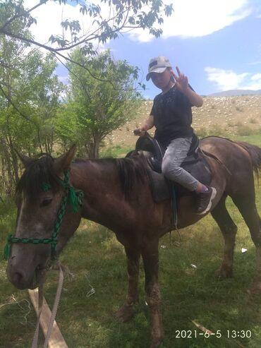 Продаю коня и корову