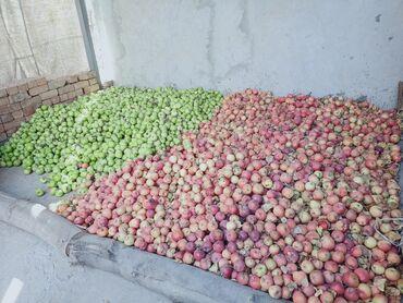 Овощи, фрукты - Кыргызстан: Алма сатабыз