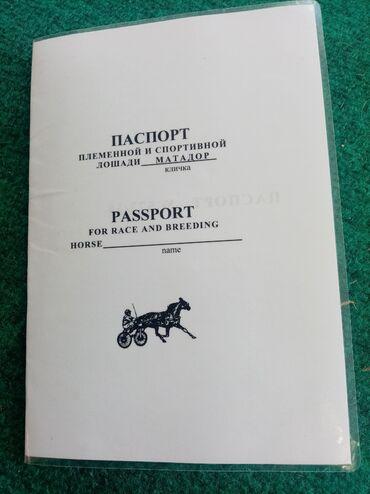 buick le sabre 3 8 at в Кыргызстан: Жорго жазга 3 жаш