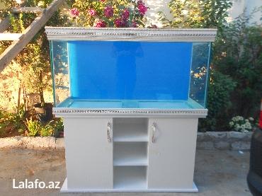 Bakı şəhərində Versage akvariumu mebeli ile birlikde 325 litrelik akvarium 10mml