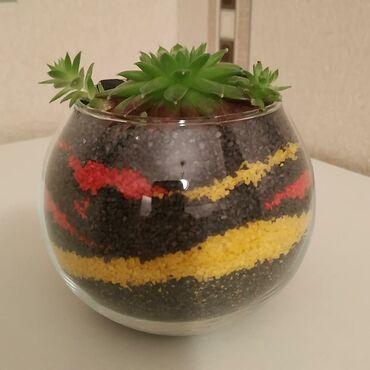 Флорариум.Растение: Молодило(Суккулент)Песок: Кварцевый.Цена: 60
