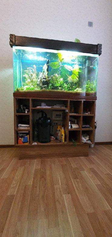 столешница под раковину в Азербайджан: Аквариум и шкаф под аквариум