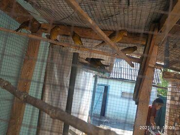Животные - Каинды: Птицы