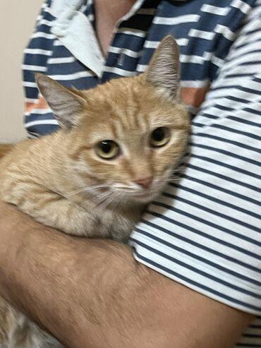 1346 elan | PIŞIKLƏR: Ищем добрых любящих хозяев для чудо котиков. У них прекрасный ласковый