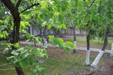 hovuz satılır in Azərbaycan | HOVUZLAR: 420 kv. m, 7 otaqlı, | Qaz, İşıq, Su