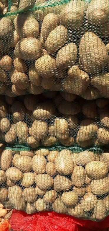 Dzak - Srbija: Prodajem bele krompire, 40 dinara kilogram, u Batajnici, veci dzak