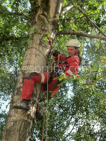 Дарак кыябыз.Пилим деревья.Бишкек и пригороды.Срубить дерево.Спилить