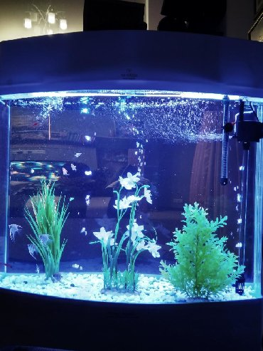 со всеми комплектующими в Кыргызстан: Продаю аквариум 180 л, размер фирменный, обозрение с двух сторон