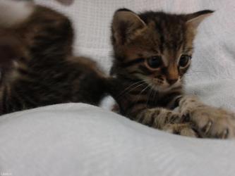 Male mace NA POKLON! - Nis