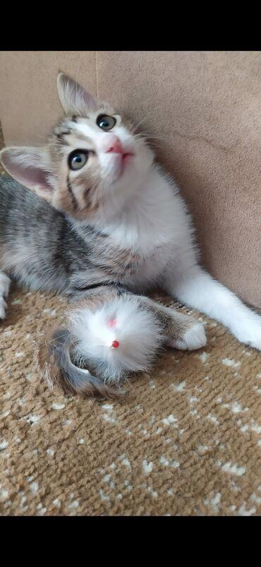В добрые и ответственные руки пристраивается котенок девочка. Ей