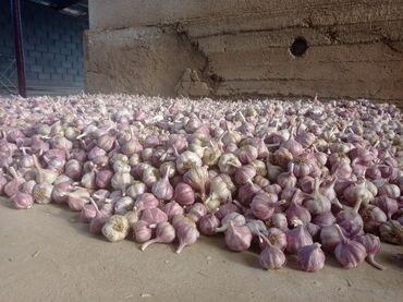 22 объявлений: Сорт: Иссык-Кульский Около тонна