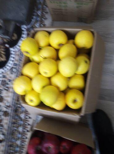 семена газонной травы в Кыргызстан: Продаем яблоки сочные, вкусные . Семеренко и Голден . На последни