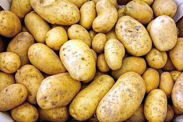 13655 объявлений: Продаю картофель 1-ой репродукции ОтборныйНаходится Ак Суу КараколЦена