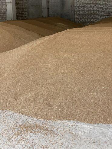184 объявлений: Продаю семена Озимой Пшеницы Сорт Алексеич 1 репродукцияВысота