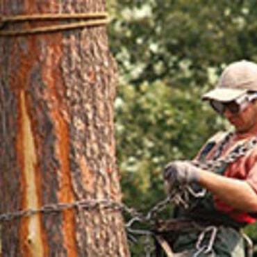 Кладка - Кыргызстан: Спилить ветки.Срубить ветки.Рубить дерево.Срубить дерево.Пилить