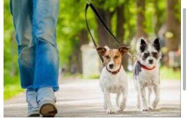 боевое самбо в Кыргызстан: Выгул собак  Подросток 10 лет  Не выгуливаю боевых собак  Раён жал   1